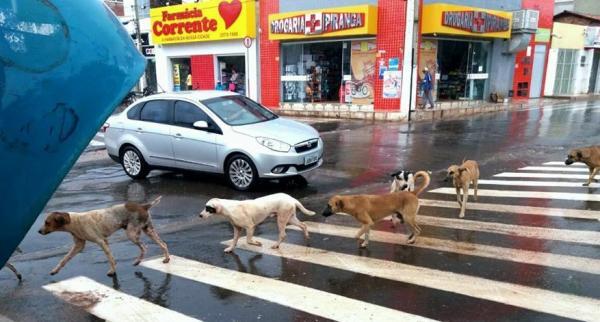 Imagem de cães atravessando faixa de pedestre em Corrente vira sucesso nas redes sociais